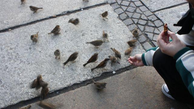 Pardais sendo alimentados próximo ao Bundestag, em Berlim