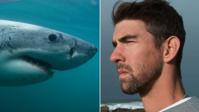 Michael Phelps və Böyük ağ kopəkbalığı.