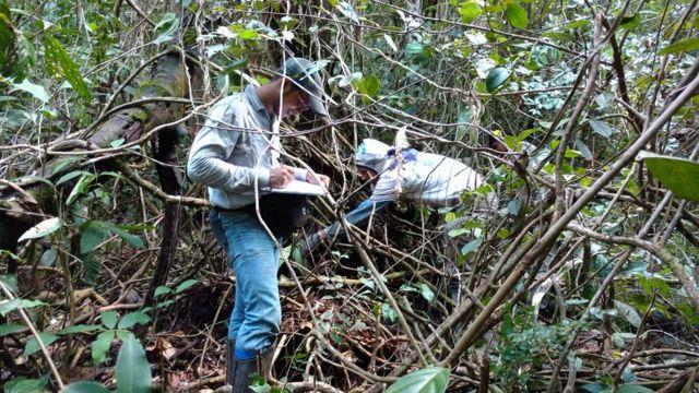 Enquanto uma pessoa mede diâmetro da árvore para fazer estimativa de sua biomassa e carbono, Fernando trabalha em seu inventário