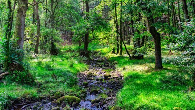 Bosque con arroyo