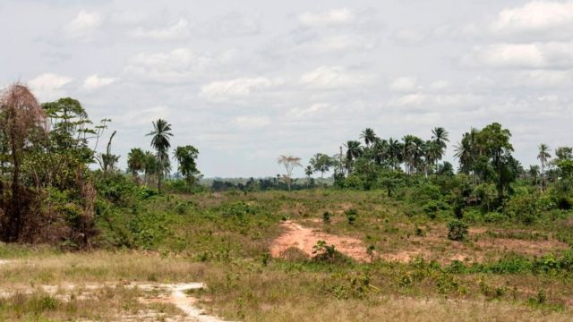Une forêt de la localité de Calabar dans l'Etat de Benue.