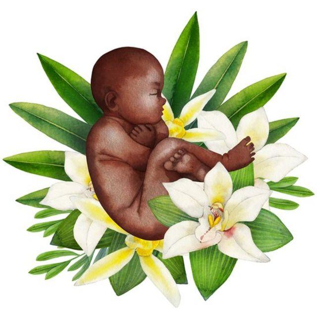 Ilustração mostra bebê em posição fetal em meio a flores e folhas de planta
