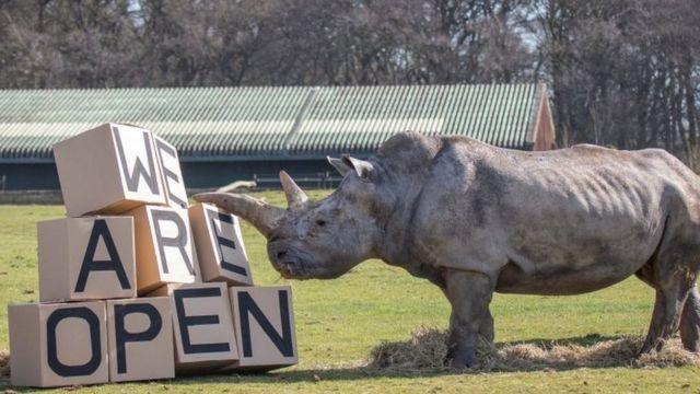 Bedfordshire'daki Whipsnade Hayvanat Bahçesi de ziyaretçilerini kabul etmeye başladı.