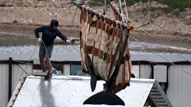 Russia to release whales from 'jail' in far east after outcry