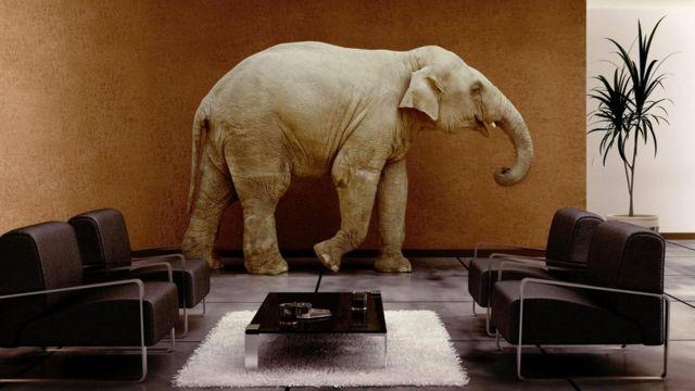 Какое животное унаследует Землю? Вряд ли это будут слоны...