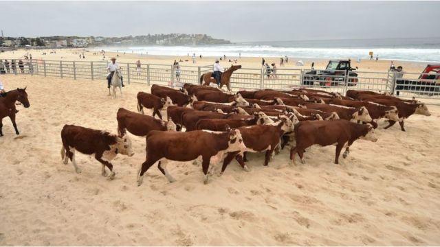 Krave na plaži