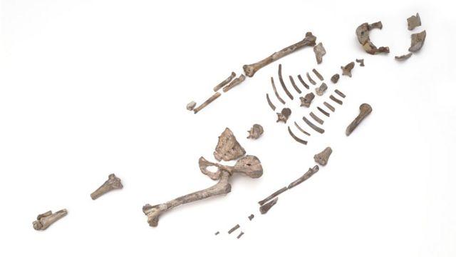 ইথিওপিয়ায় লুসির সংরক্ষিত হাড়