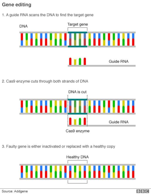 Gene-editing method shrinks cancer