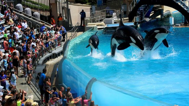 SeaWorld hits back in Virgin Holidays whale tourism row