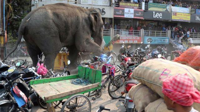 Pessoas observam elefante atingido por um dardo com tranquilizante em Siliguri, na Índia