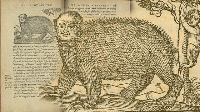 Ilustración del perico ligero - New York Public Library