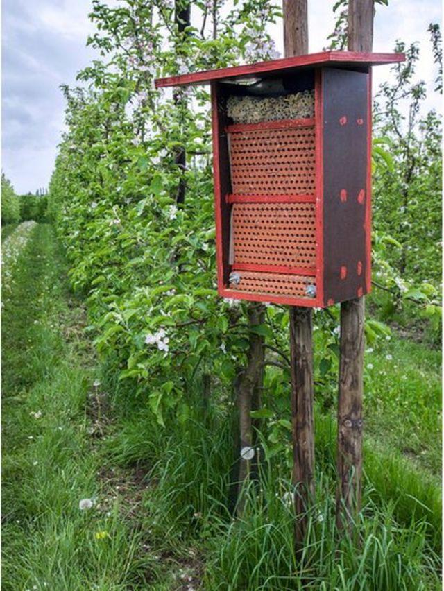 отель для пчел