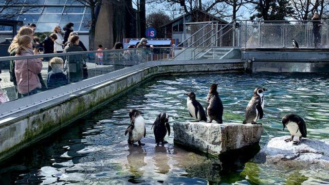 Multidões começam a voltar ao Zoológico de Copenhague