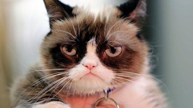 Imagens do Grumpy Cat são algumas das constantes do Tumblr