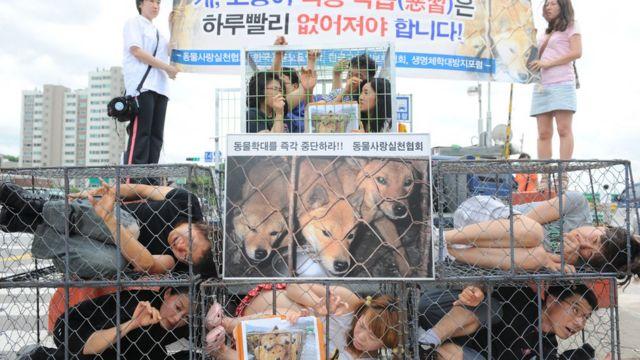 Köpek eti tüketimine karşı yapılan bir protesto