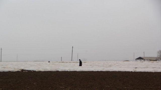 fermerlər, Tovuz, kök sahəsi