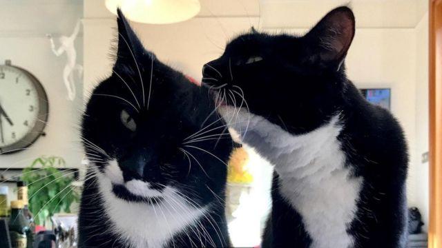 Коти часто мурчать, коли вилизують одне одного