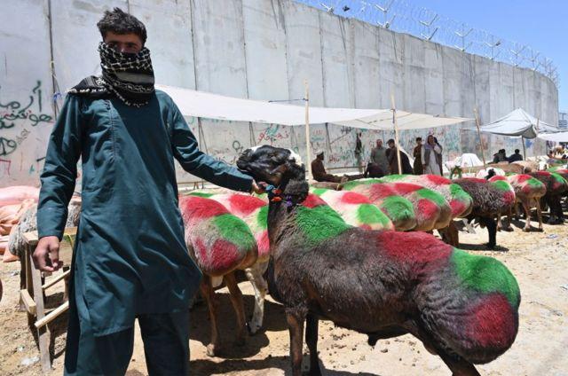 Pastor de ovejas en Afganistán.