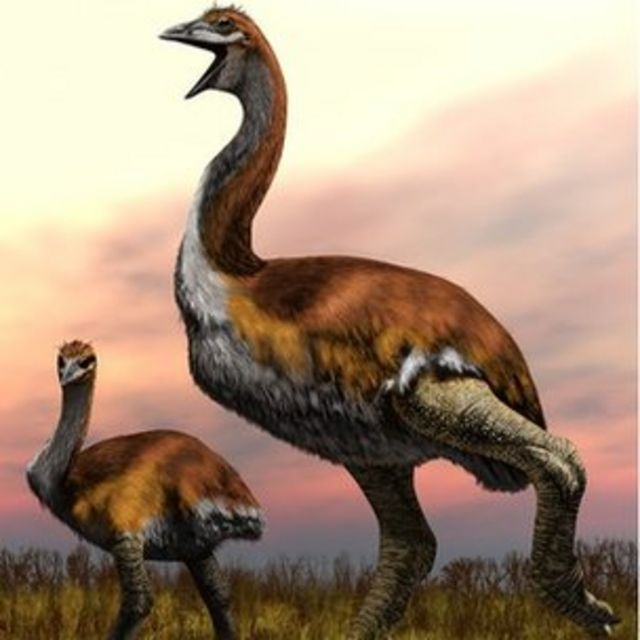 Elephant birds: Who killed the largest birds that ever lived?