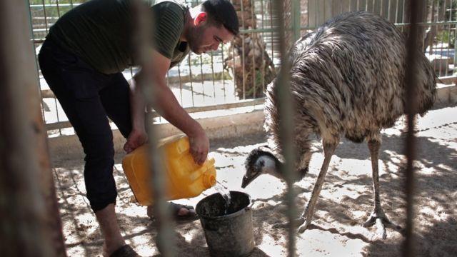 Сотрудник зоопарка со страусом