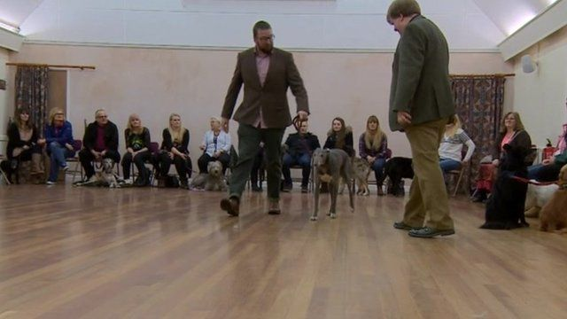 Dog auditions