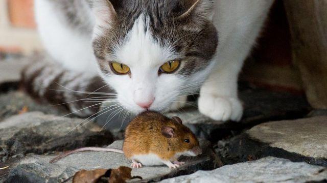 По всему миру в домах, где живут люди, находят мышей