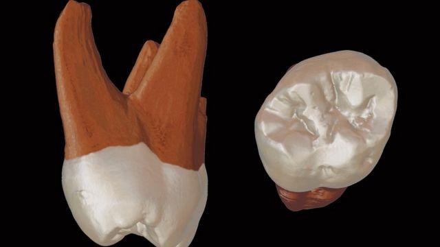 Digitalni trodimenzionalni model fosilnog zuba iz Pešturine