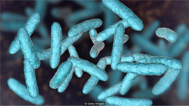 Mikroba