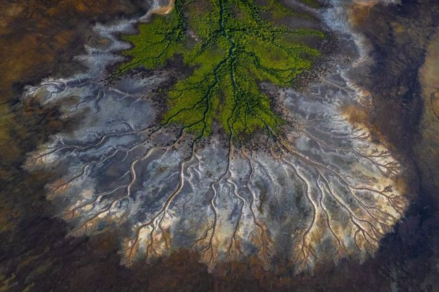 An aerial photo of rivers and streams in the Gulf of Carpentaria, Australia