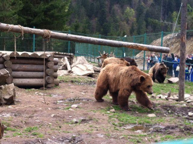 ведмеді