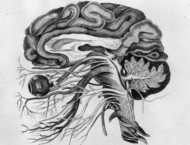 મગજની તસવીર