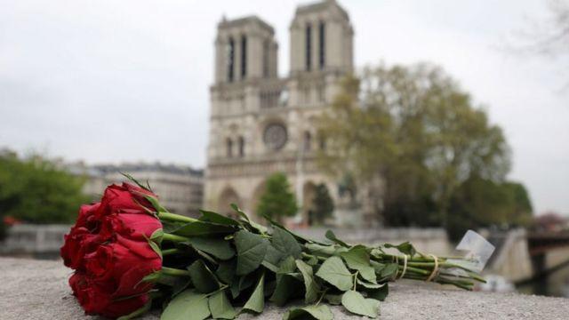 Una rosa frente a Notre Dame