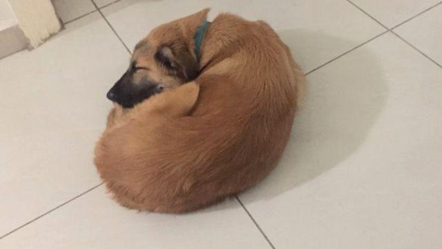 Bunduq curled up