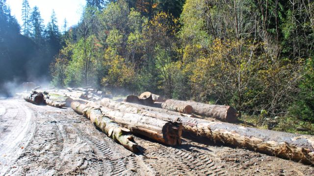 Image shows logging sites near the river