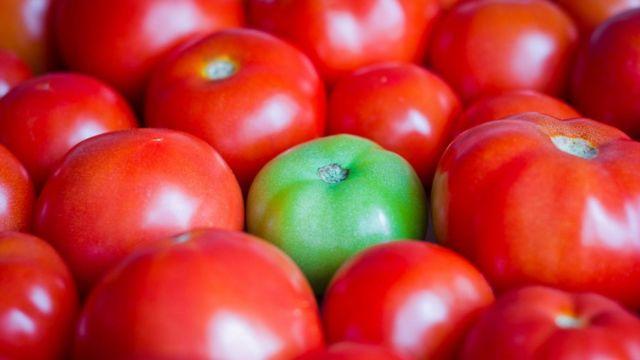 Um tomate verde em meio a outros vermelhos