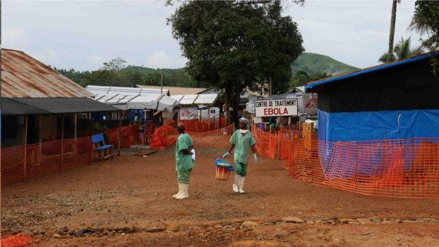 科學家得出結論稱,這種新型埃博拉病毒的爆發始於一個人:一個來自幾內亞的兩歲男孩,後者判斷可能是在蝙蝠群聚的空心樹上玩耍時被感染的。