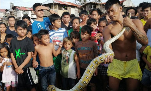 Villagers capture a python on Christmas Day in the typhoon-hit city of Ormoc, Philippines, 25 December 2019