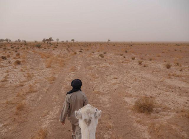 رجل يقود جملا عبر الصحراء