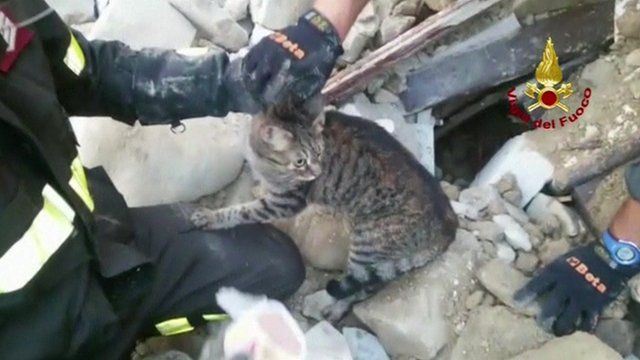 A cat has been rescued from the rubble of a house, 16 days after an earthquake hit the Italian city of Amatrice.