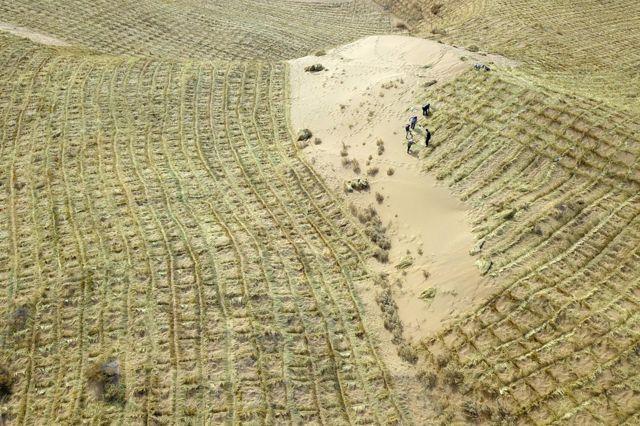 在腾格里沙漠南缘的甘肃省武威市,当地人正通过扎草方格的方式固定沙子。