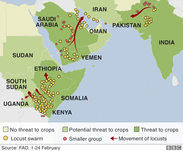Map showing locusts swarms across parts of Africa and Asia