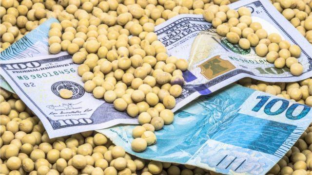 Notas de real e dólar no meio de grãos de soja