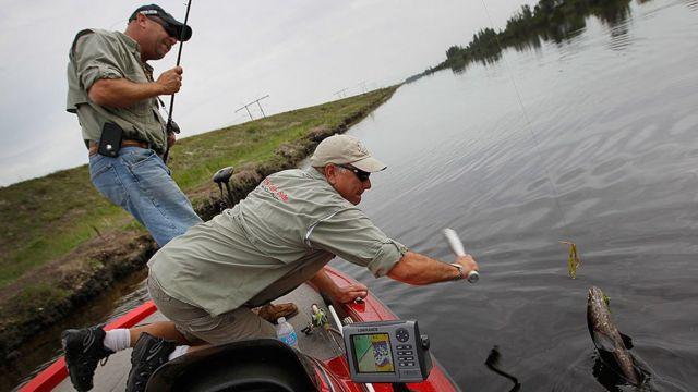 Nelayan sedang berupaya membunuh ikan gabus di Florida