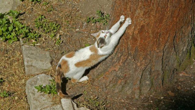 Un gato rasca un tronco.