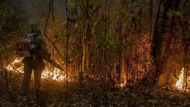 Bombeiro de costas olha para floresta queimando
