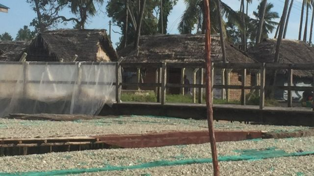 Ndoa za mitala zimeshamiri hasa maeneo ya pwani ya Tanzania