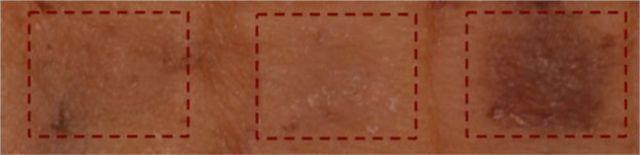 Образцы кожи