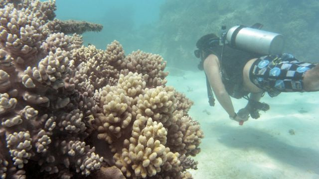 Just 7% of Australia's Great Barrier Reef escapes bleaching