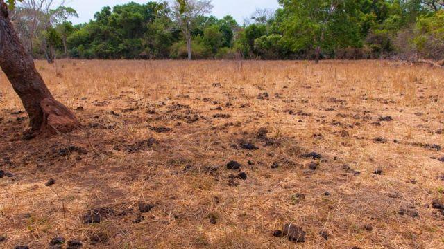 Vegetação do Cerrado em época de seca