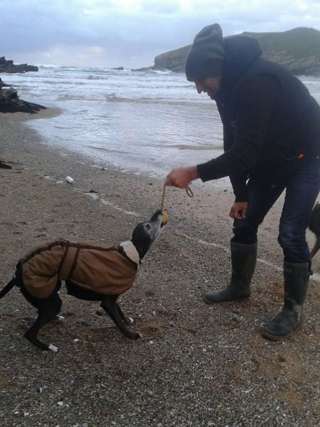 Walnut the whippet takes final 'walk' in Cornwall